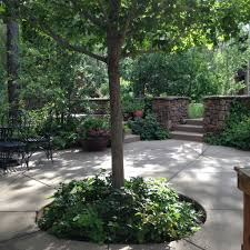 native plant solutions northern arizona native plants flagstaff landscaping flagstaff