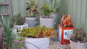 potted plants what you need to know stuff co nz
