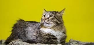 gerüche die katzen nicht mö 10 tipps gegen unsauberkeit bei katzen das kannst du machen