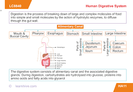 all worksheets the human digestive system worksheet answers