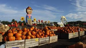 Pumpkin Picking Places In South Jersey by Pumpkinland U2013 Linvilla Orchards