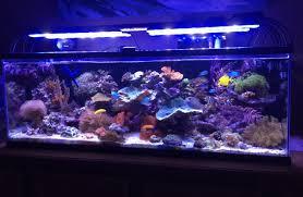 led reef aquarium lighting aquarium lighting information guide reef planted par pur pas