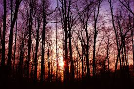 wallpaper tumblr forest beauty s forest stock by thy darkest hour on deviantart