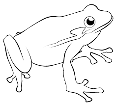 Red Eyed Tree Frog Coloring Page 336614 Frog Colouring Page