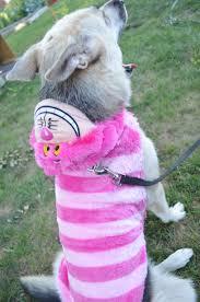 petsmart thanksgiving hours petsmart u0027s halloween costumes u0026 toys for dogs giveaway