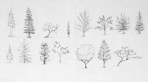 tree sketches google search art u003e pencil pinterest tree