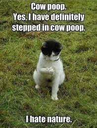 Funny Cow Memes - 25 funny cat memes that will make you lol