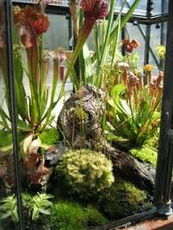 large terrarium ideas terrariums and wardian cases also protect