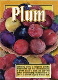 my edible fruit trees plum trees nsw
