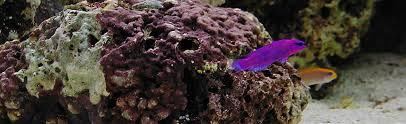 marine ornamentals aquaculture business services home