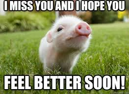 Feel Better Meme - i miss you and i hope you feel better soon baby pig quickmeme