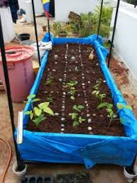 a beginner u0027s guide to organic terrace gardening from containers