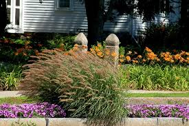 flower borders ideas to make your landscaping sizzle