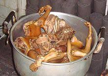 chien cuisiné cynophagie wikipédia