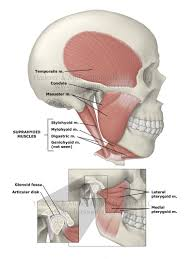 Parts Of The Face Anatomy Anatomy Of Tmj Choice Image Learn Human Anatomy Image