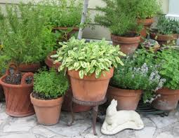 articles with herb garden planter size tag herb garden pot pictures