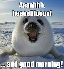 Good Morning Meme - 20 adorable and cute good morning memes sayingimages com