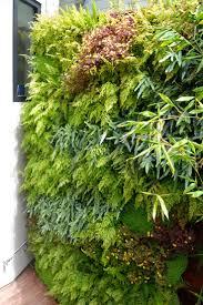 Vertical Garden Ideas 17 Best Fern Walls Vertical Garden Ideas Images On Pinterest