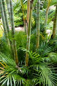 different types of bamboo learn about bamboo plants for the garden