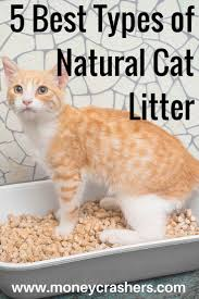 17 best images about cats friends time accesories for looking for an effective eco friendly cat litter these five natural alternatives to clay litter all come with unique pros cons learn more about each