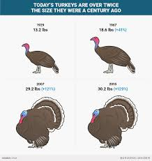 thanksgiving turkeys doubled in size since the 1950s