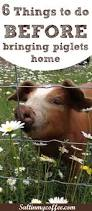 best 25 pig pen ideas on pinterest what do sheep eat puggle