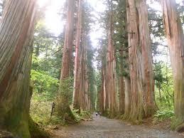 hiking to togakushi s cedar trees unique nagano unique