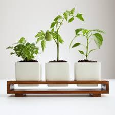 Indoor Herb Garden Kit 117 Best Plants Images On Pinterest Herbs Planters And Gardens