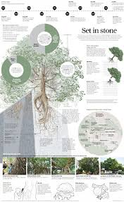 Define Tree Hong Kong U0027s Wall Trees Everything You Need To Know About The