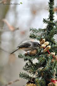 580 best christmas is for the birds and other wildlife