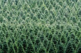 real trees or ones which are better for the