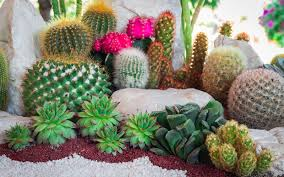 15 cactus garden ideas photos garden club