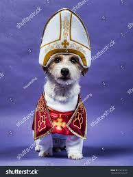 pet halloween background jack russell terrier dressed halloween wearing stock photo