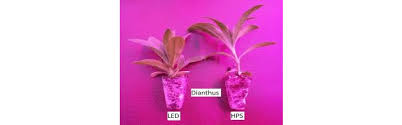 philips led grow light u s grower accelerates rooting of plants with philips led grow