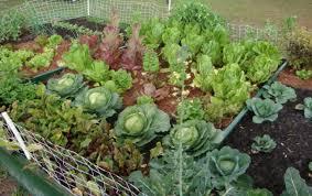 backyard vegetable garden ideas png hi res 720p hd