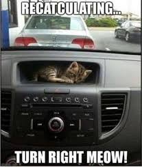 Gps Meme - who needs a gps when you have cats meme guy