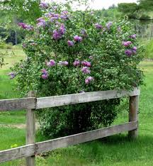 native new england plants plants new hampshire garden solutions