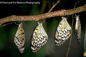 questions about butterfly and moth behavior the children s