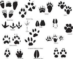 best 25 tiger print tattoos ideas on tiger drawing best 25 tiger