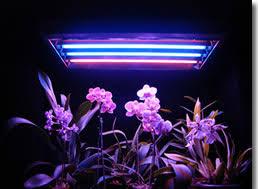 t5 vs led grow lights grow plant light led grow lights and plant lights