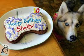 dog birthday cake diy dog birthday cake diy dog treats to the snow dogs