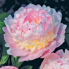cheap exotic plants for sale online buy exotic plants van meuwen