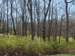 Ohio forest images Controlling non native invasive plants in ohio forests bush jpg