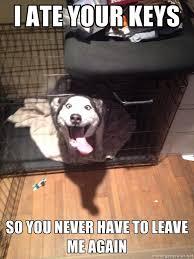 Husky Meme - overly attached husky meme guy