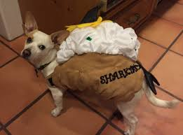 the pros and cons of pet halloween costumes dr marty becker