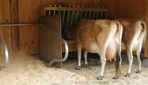 Cattle Barns Designs Building A Hay Rack U2013 Spirited Rose Homestead Dairy Farm
