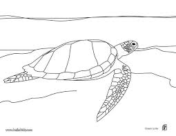 green coloring page swimming green turtle coloring pages hellokids com