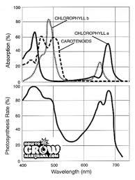 Light Cycle For Weed Marijuana Grow Lights Led Hps Cfl