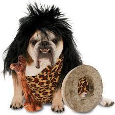 Funny Halloween Animal Costumes 27 Halloween Images Costumes Costume Ideas