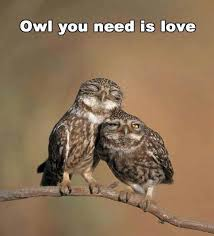 Funny Owl Meme - owl you need funny pictures quotes memes funny images funny